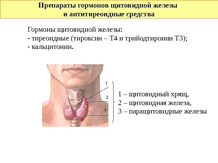 Аденома, образовавшаяся на щитовидной железе, представляет собой доброкачественное новообразование с чёткими краями