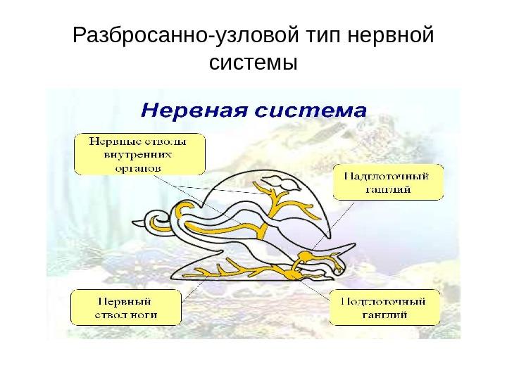 плоские и круглые черви паразиты человека