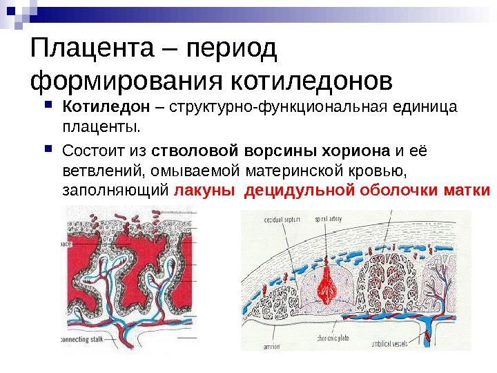 Провизорные органы Провизорные органы или внезародышевые органы