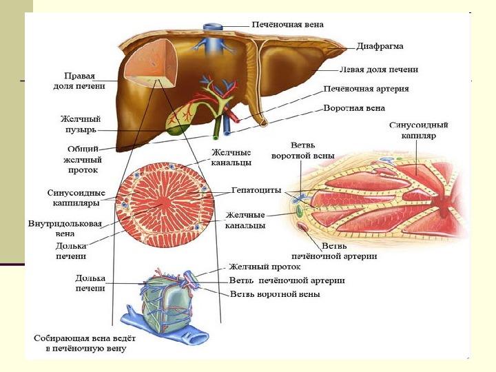 лекарство от паразитов буфер ток