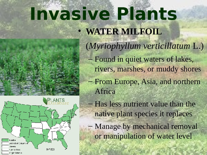 invasive plants in the american river Some arizona waterways infested with quagga mussels and other aquatic invasive species az map of listed species before leaving a listed water, you must: clean & dry – remove all mud, plants and mussels from your boat or equipment.