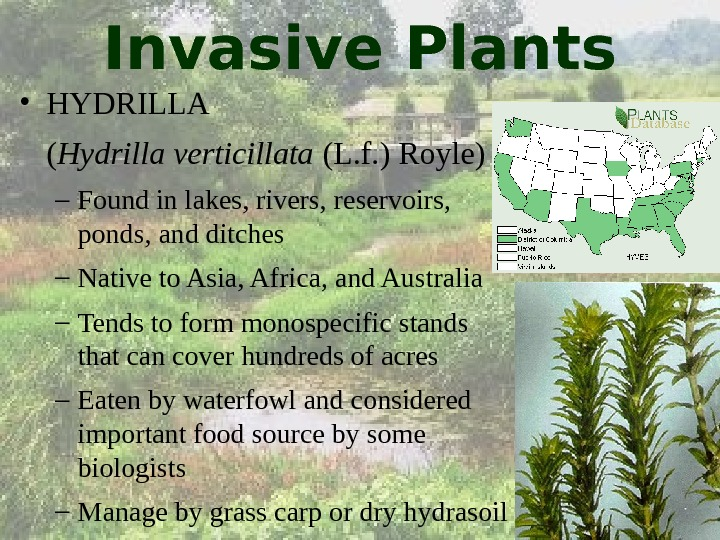 removal and prevention of invasive plants in multnomah county essay Insect pest prevention and county weed programs the introduction of non-native invasive plants has increased dramatically in the past decade because of the.