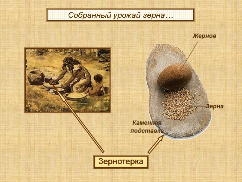 Картинки по запросу Зернотерка древнего человека