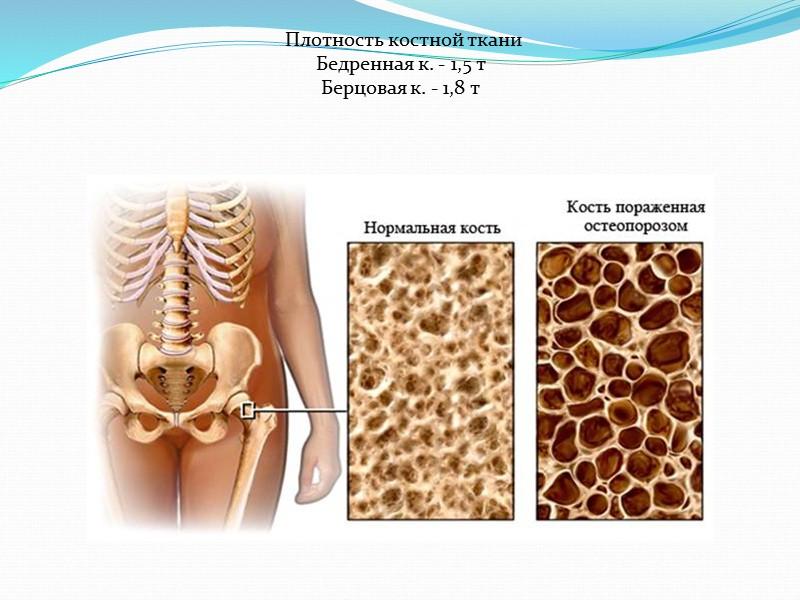 Соматическая нервная система (от греческого «сома» – «тело») регулирует работу скелетных мышц. Благодаря ей