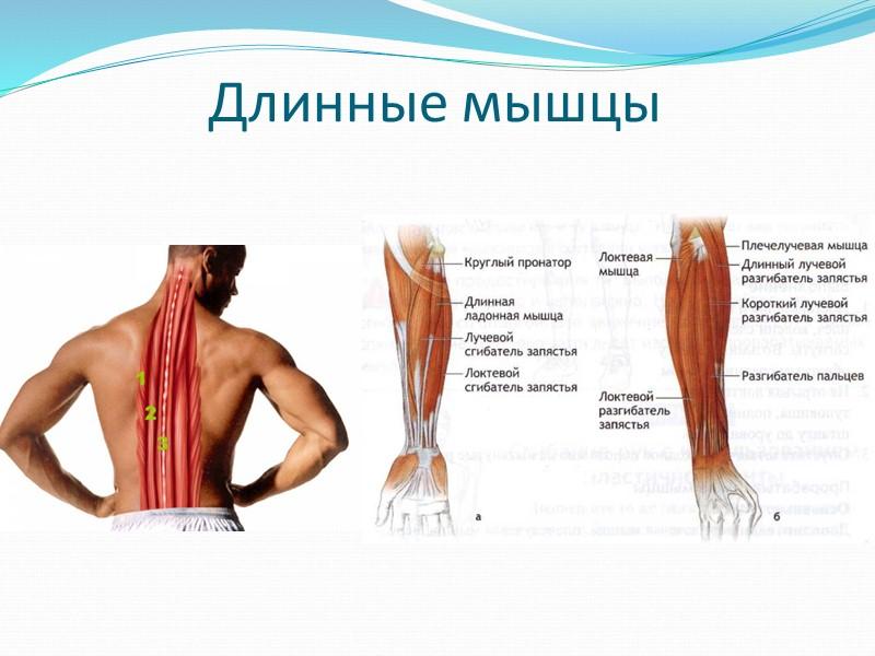 Жиры (липиды) – являются важным источником энергии в организме, необходимый составной частью клеток. Жиры