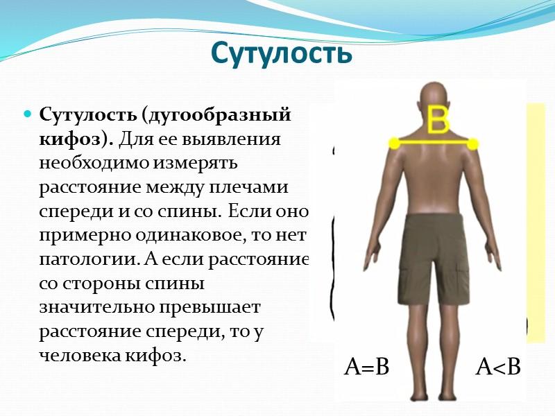 Основной принцип работы нервной системы – рефлекторный. Любая ответная реакция организма на раздражитель, осуществляемая