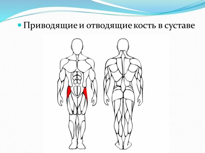 Витамин К  Регулирует процесс свертывания крови.  Синтезируется кишечными бактериями. Содержится в зеленых