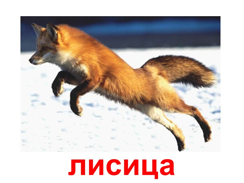 Днем, картинки лиса заяц белка волк