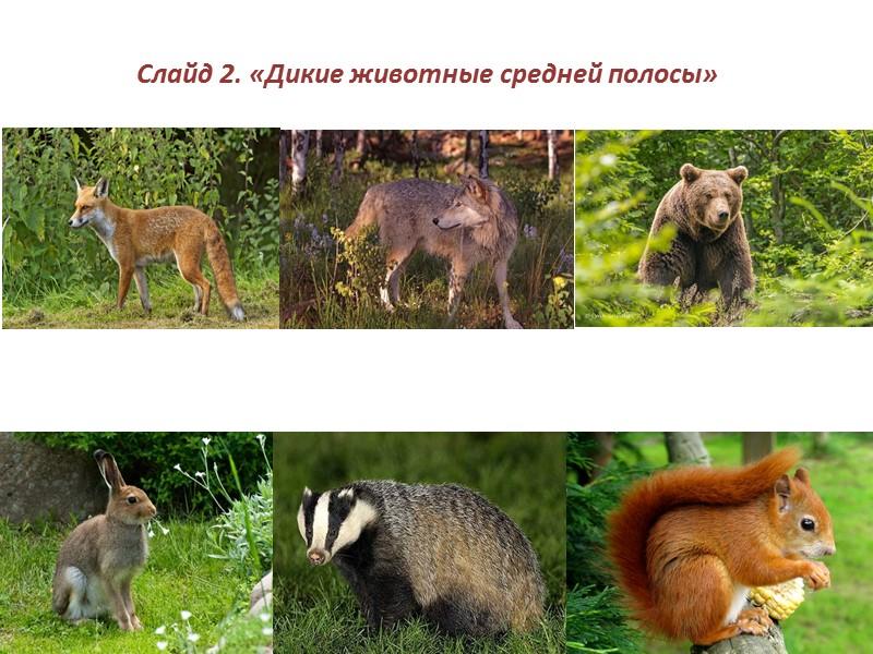 Звери средней полосы россии фото и названия