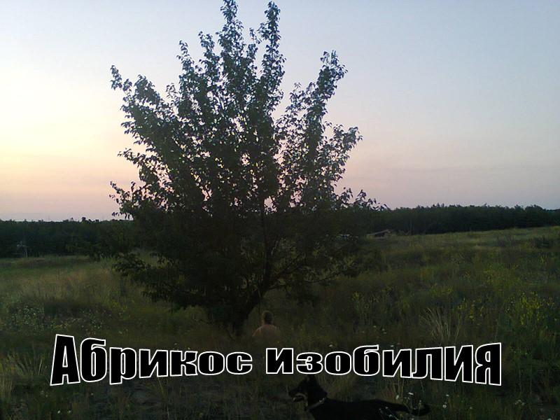 Поселение у хутора Благодатное Недалеко от Хутора Благодатное, Амвросиевский Район. Поселение Благодатное. Год назад