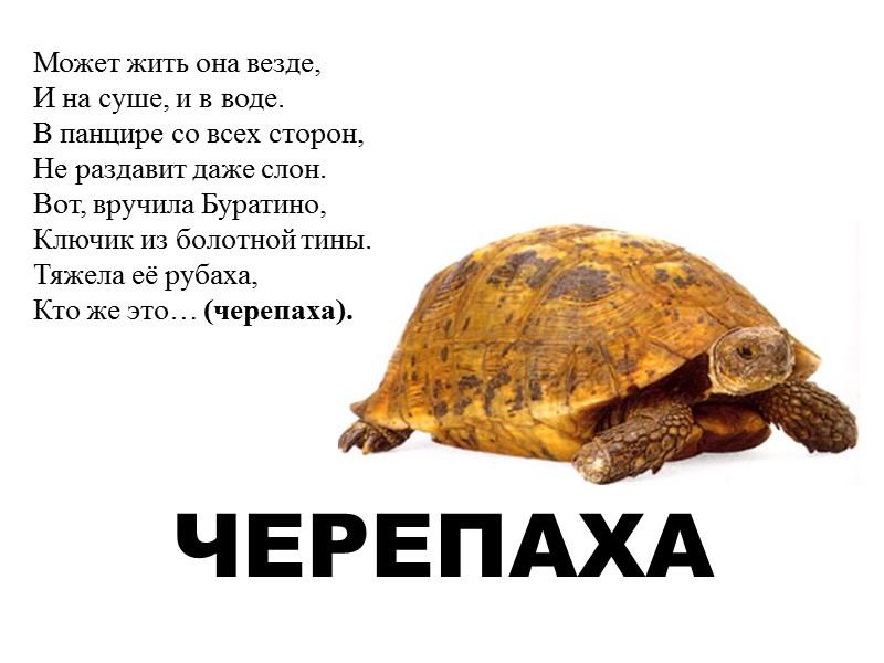 Стихи черепаха не спешит