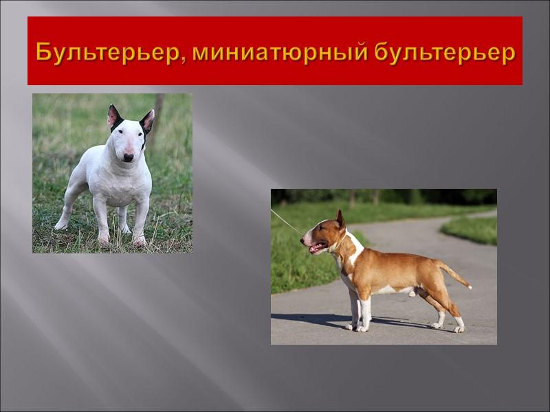 Я помогу вам сделать выбор в пользу той или иной породы собаки. Не забывайте,