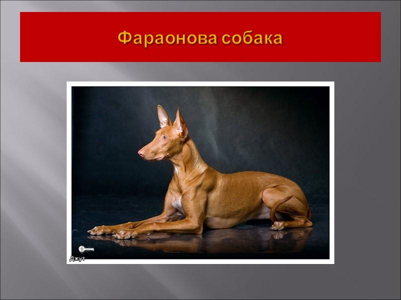 Классификация пород собак   (система FCI)  - классификация по экстерьеру и предназначению