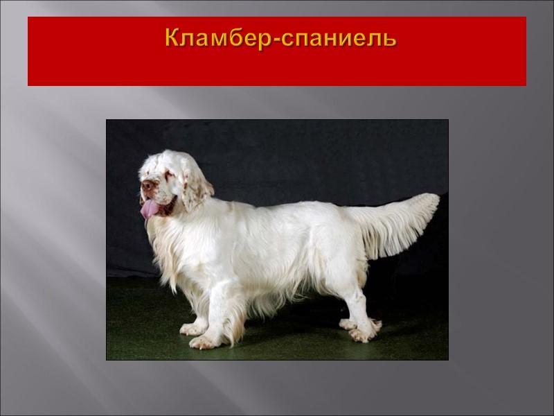 Собаки этой секции подвижны, выносливы, хорошо дрессируются. В семье адекватны, хорошо относятся к детям.