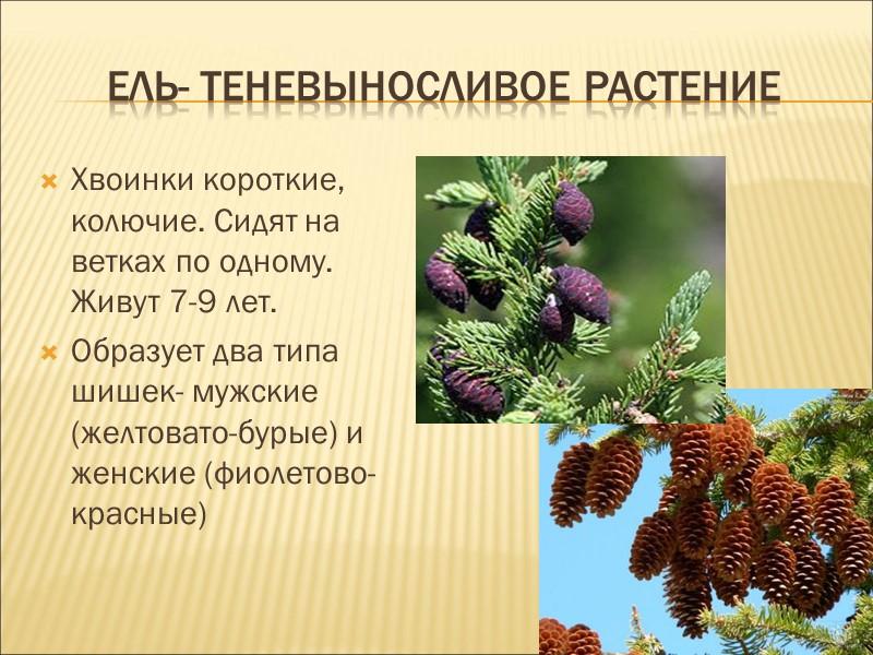 Используются как декоративные растения и строительный материал