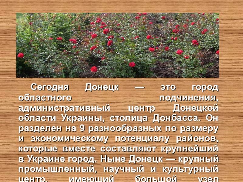 Символ Донецкой области «Пальма Мерцалова»