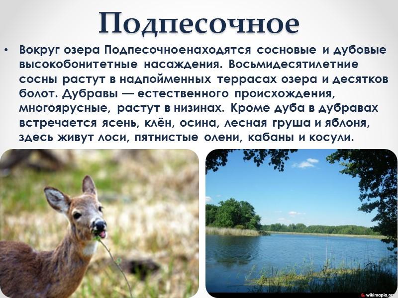 К бассейну реки Днепр относятся реки Самара, Волчья, Бык и Солёная. Реки маловодны, летом