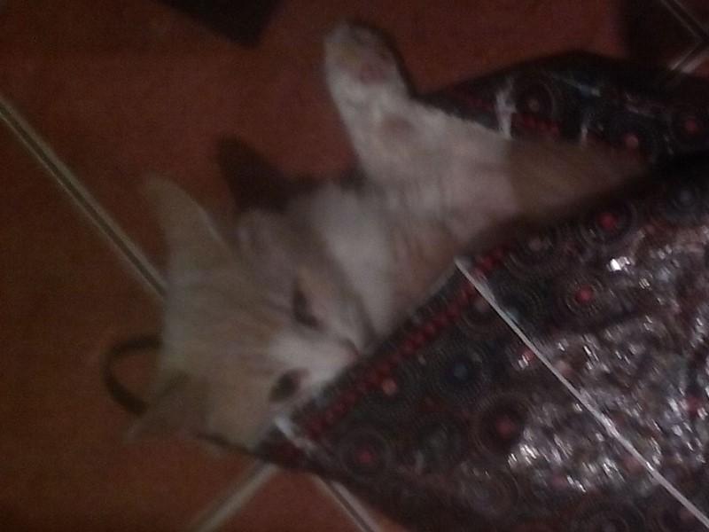 Маме стало мало Хомяка она захотела кота. Папа долгое время говорил; нет .Но потом