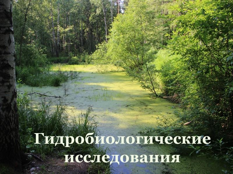 Экскурсия на ручей Светлый (7 класс, сентябрь 2014)