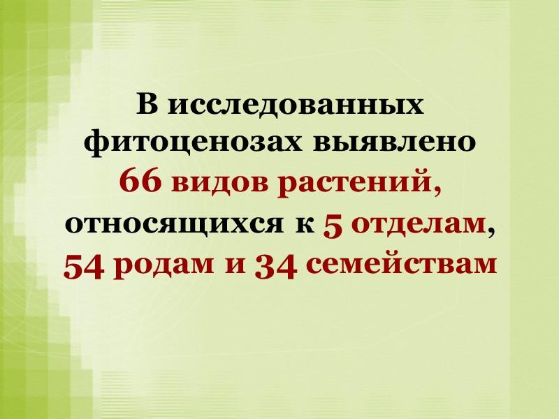 Местообитание касатика ложноаировидного в Черняевском лесу Площадь 11245,9 кв.м Периметр 480,78м
