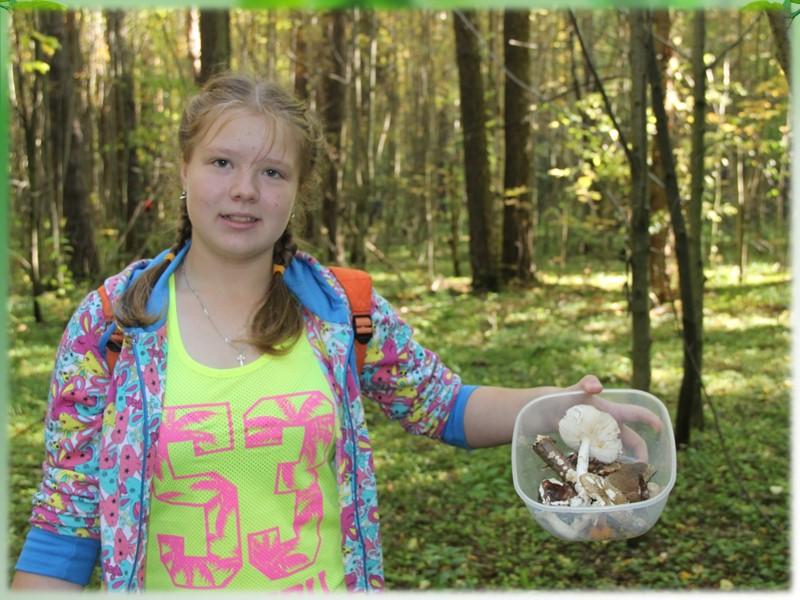 Качественный и количественный учет орнитофауны Синица большая Большой пестрый дятел