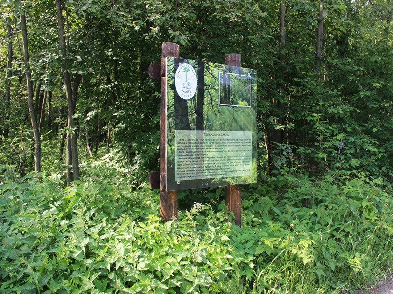 Сосняк кисличный: 34 вида агарикоидных базидиомицетов, относящихся к 3 порядкам, 14 семействам и 20