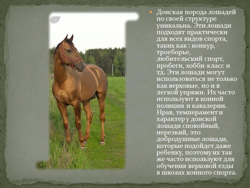 Донская порода лошадей по своей структуре уникальна. Эти лошади подходят практически для всех видов
