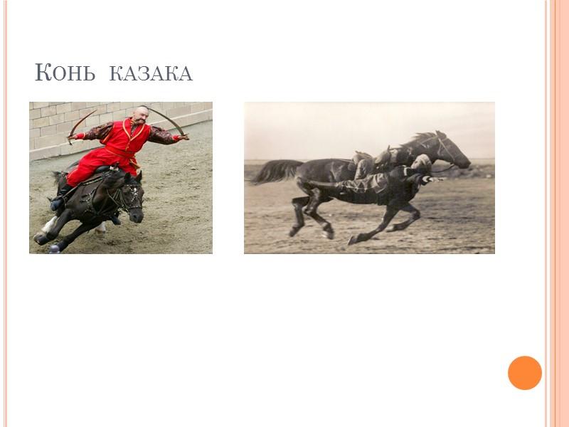 Конь  казака