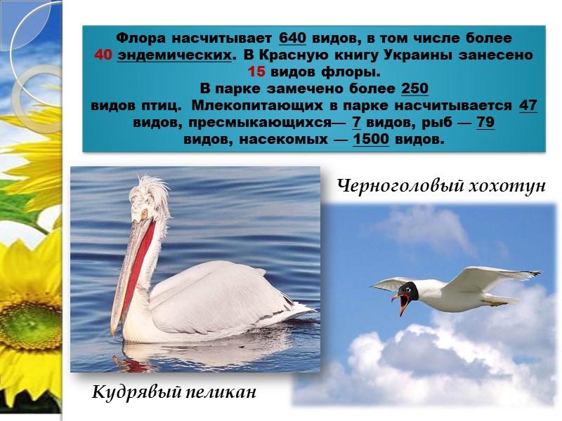 Сорокопут-жулан Скворец розовый
