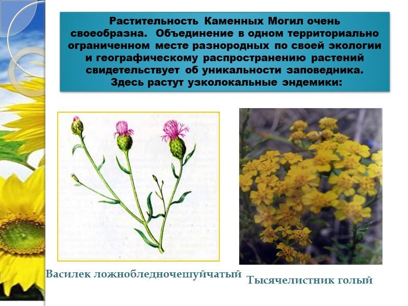Заповедники Донецкой области Украинский степной Расположен на территории трех областей - Донецкой, Запорожской и