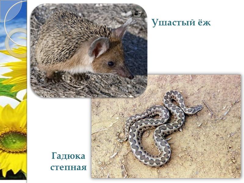Флора насчитывает 640 видов, в том числе более 40 эндемических. В Красную книгу Украины