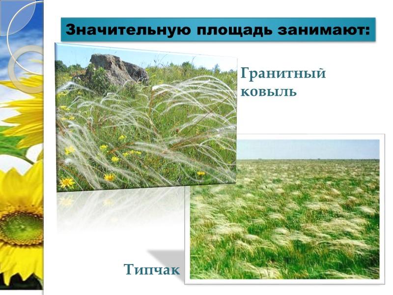 Хомутовская степь Наибольшая по площади (1028 га) часть Украинского степного заповедника. Она расположена на