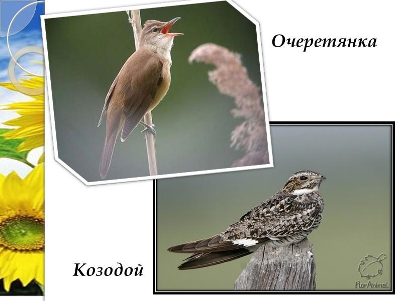 Сохранились здесь и такие редчайшие растения:  Калофака волжская Катран татарский