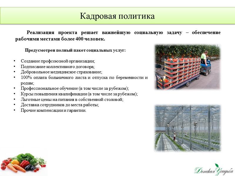 Производственные показатели Реализация овощной продукции
