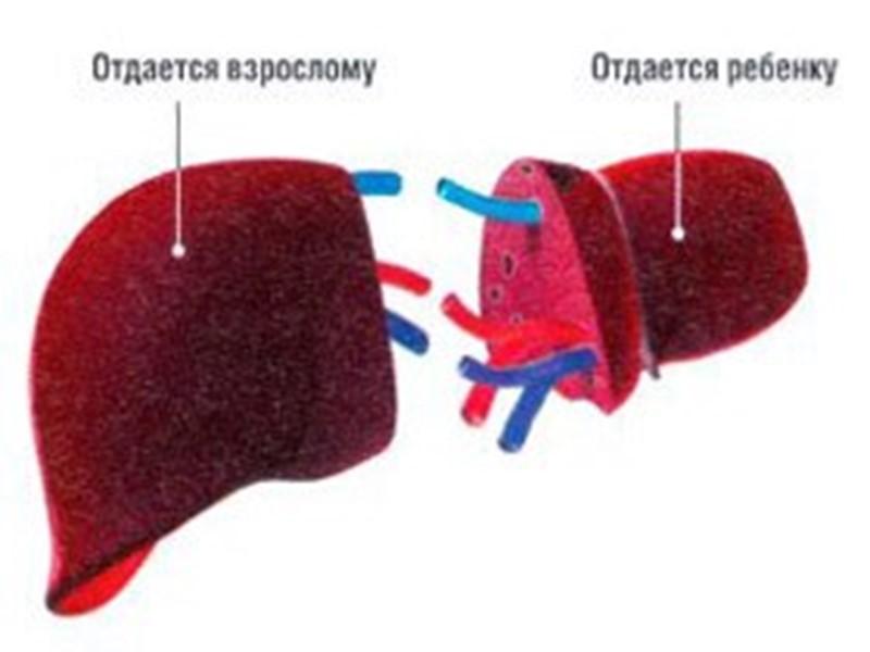 Донор (от лат. dono — дарю), лицо, дающее для переливания свою кровь, ткань (например,