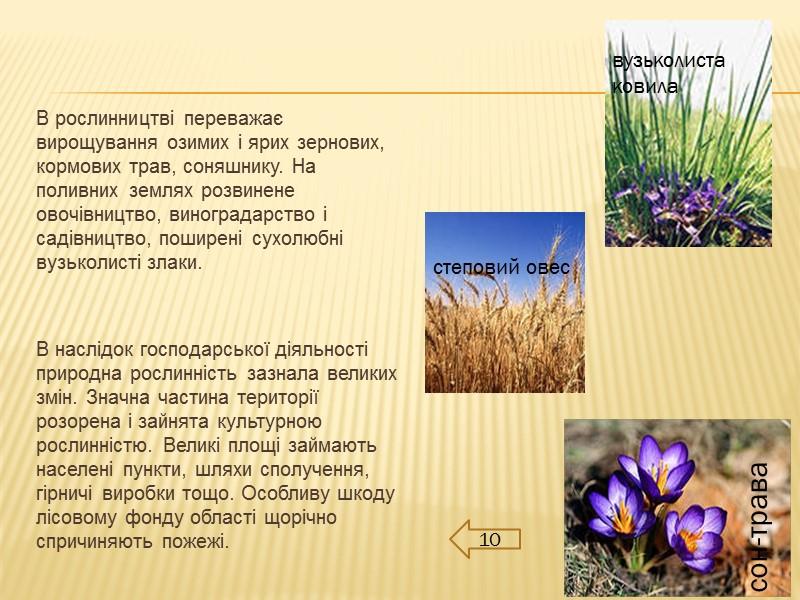 1.2 Адміністративно-територіальний устрій  Територія Донецька поділена на: 9 районів,  52 міста,
