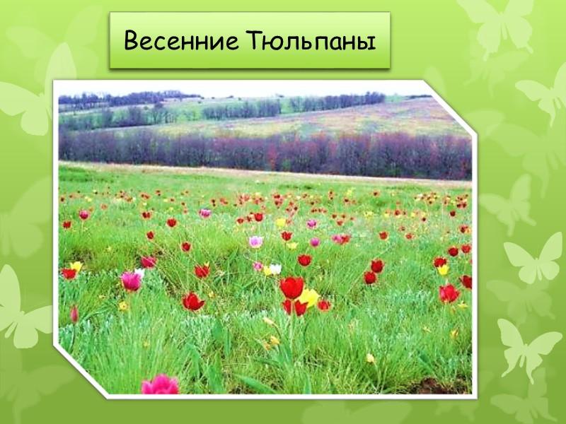 Иловля — река в европейской части России, левый приток Дона. Общая длина Иловли составляет