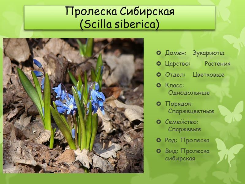 Климат природного парка «Донской» Характеристика Значение Абсолютный максимум (июль), °C +44 Средний максимум (июль),