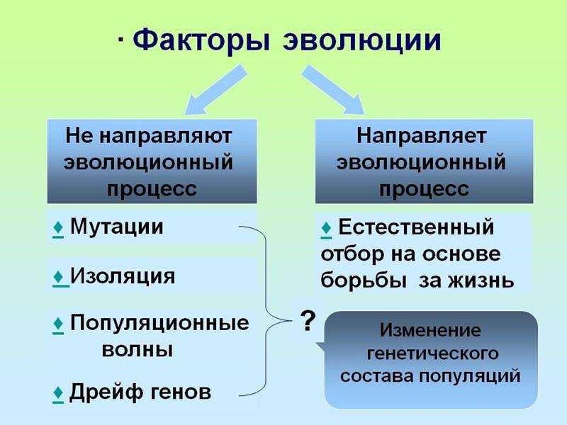 жилья какую роль играет мутация в процессе эволюции основное полотно