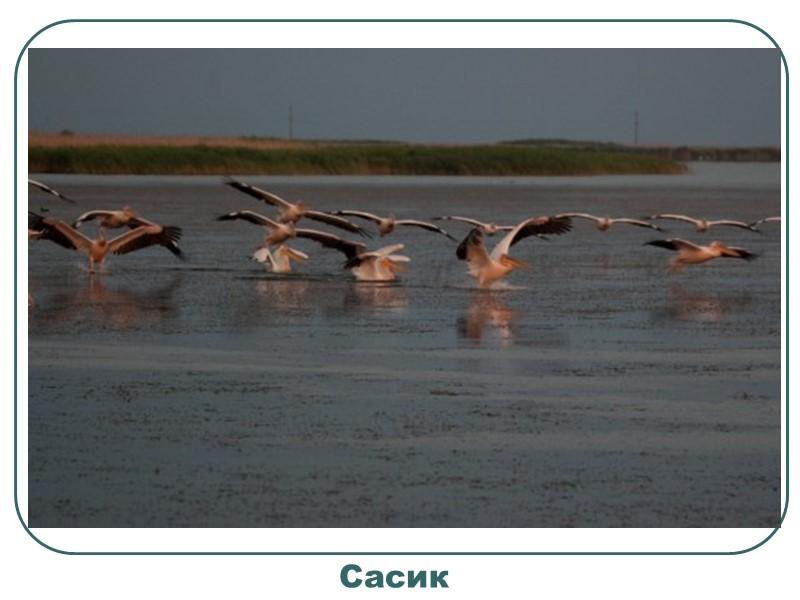 Озеро «Люцимир» славиться багатством водоплавних птахів. У великій кількості тут селиться великий норець, сіра