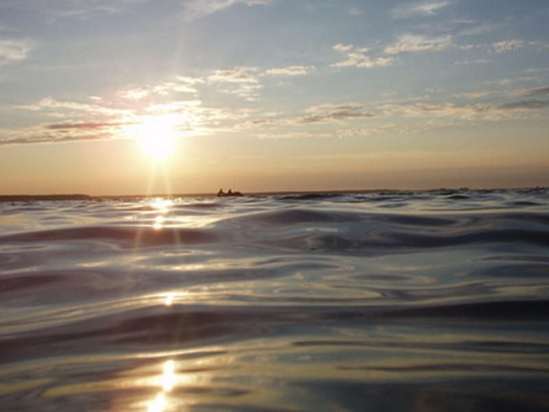 Гідробіологічний режим водоймищ істотно відрізняється від режиму рік: біомаса у водосховищі утворюється більш інтенсивно,