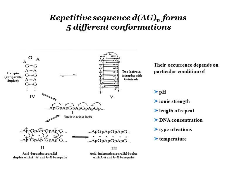 Канонические структуры ДНК (А- и В- формы)     двойные спирали