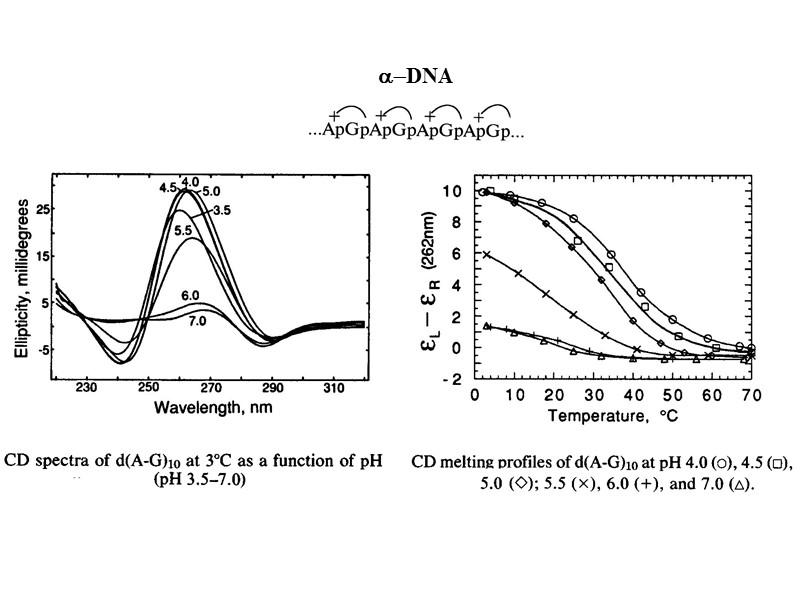 Последовательности ДНК, склонные к образованию неканонических форм    повторяющиеся моно-, ди- и