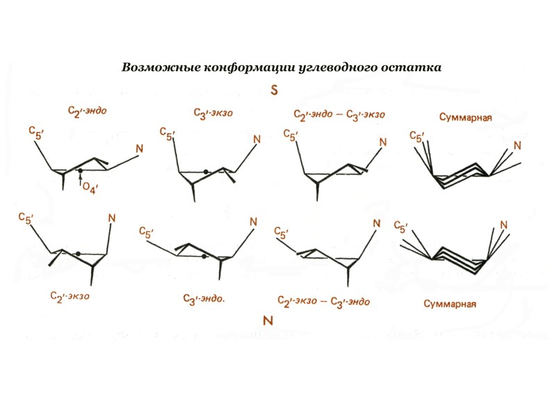 Non-canonical DNA structures formed by  trinucleotide repeats d(CGG)n/d(CCG)n , d(CAG)n/d(CTG)n, d(GAA)n/d(TTC)n can expand