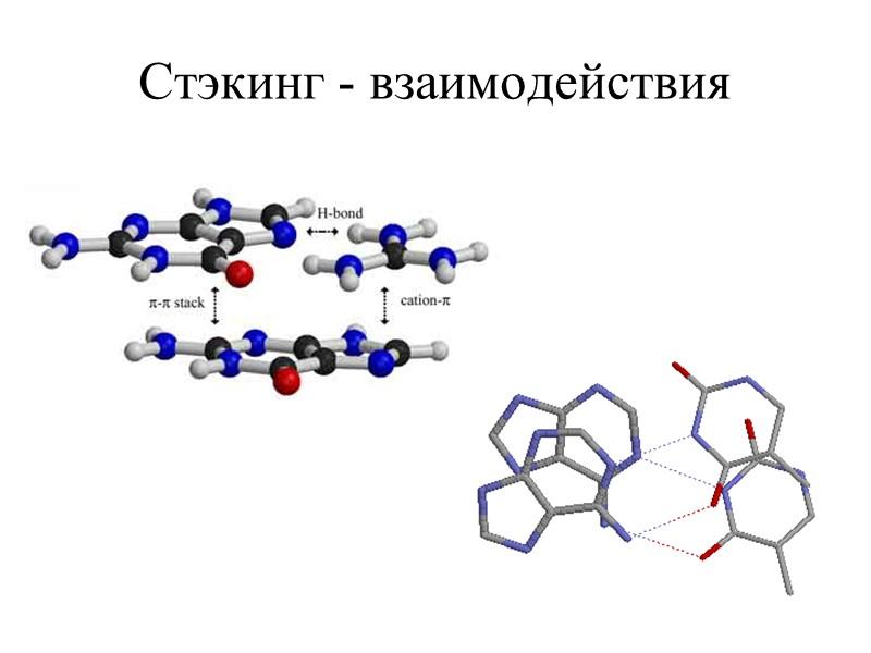 Последовательности, образующие неканонические формы ДНК, относительно редки в прокариотах, но широко распространены в эукариотических