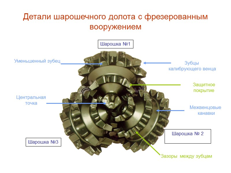 Основные элементы лапы