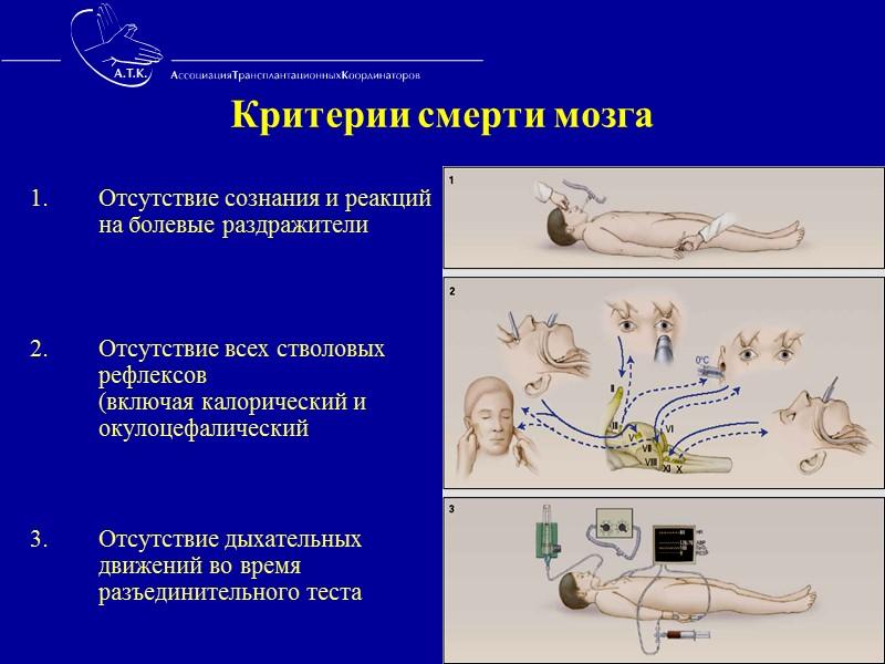 Динамика программы МОД на базах  «ФНЦ ТиИО» 83,3% 72,2% Количество полученных органов от