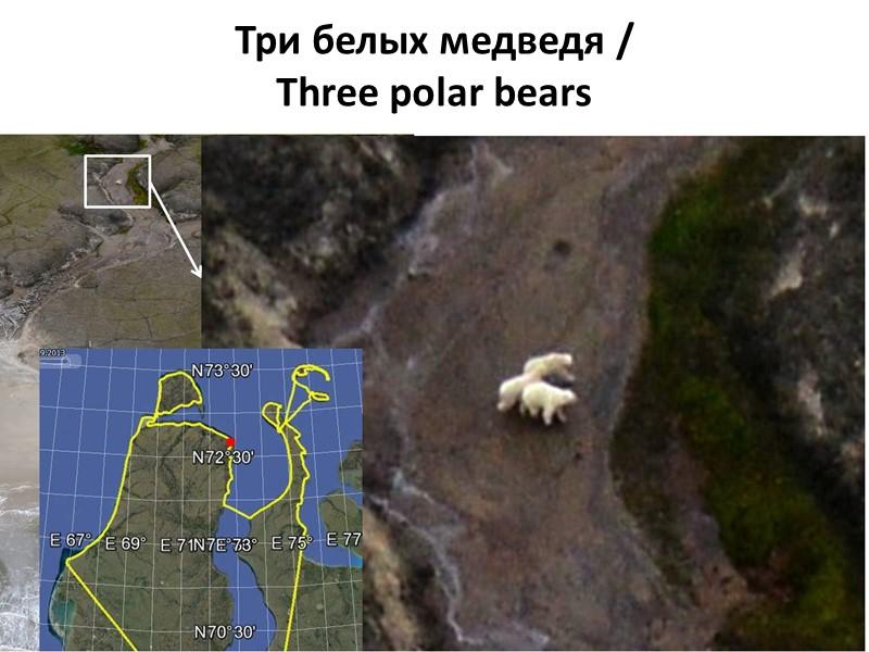 СТРАТЕГИЯ  Стратегия экологической безопасности  при освоении нефте-газовых месторождений в арктической зоне России