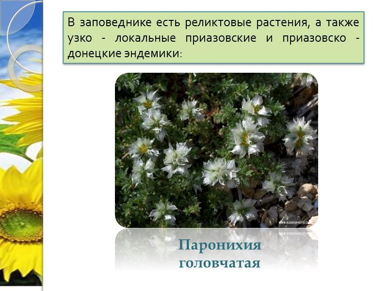 В заповеднике есть реликтовые растения, а также узко - локальные приазовские и приазовско -