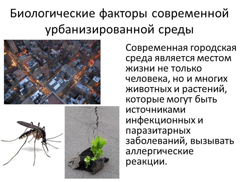 Многие комнатные растения обладают фитонцидными свойствами. В помещении, где находятся цитрусовые, розмарин, мирт, хлорофитум